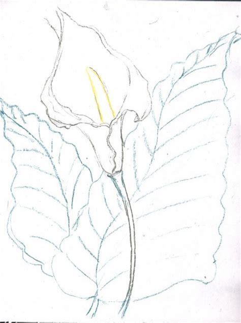 dibujos flores alcatraz imagui alcatraz blanco y negro