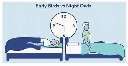 Circadian Rhythm Chronotype Healthy Sleep Sleepopolis Graphic