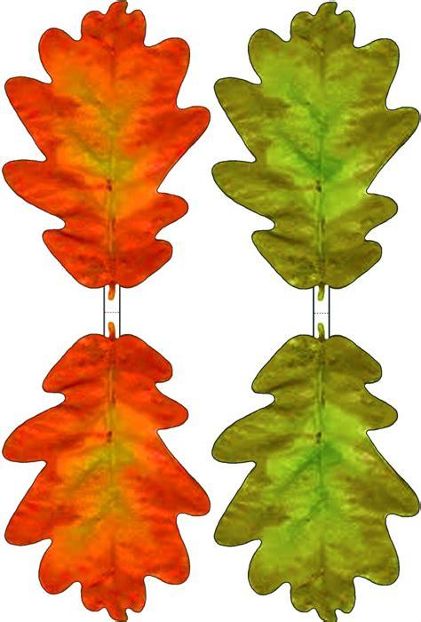 picture  oak leaves   clip art