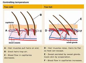 Tam U0026 39 S Bio  2 77b Thermoregulation
