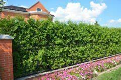 Thuja Brabant Oder Smaragd : zwiebeln die sorten im berblick ~ Orissabook.com Haus und Dekorationen
