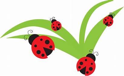 Bug Clip Ladybug Clipart Lady Leaf Flower
