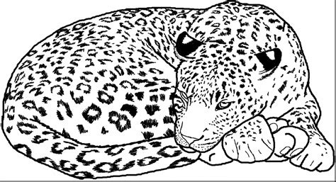 Leopard Coloring Pages Coloring Pages
