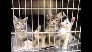 the sad truth about animal shelters. Music - I closed my ...