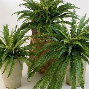 Plante Exterieur Artificielle : jardins bleus plantes artificielles ~ Teatrodelosmanantiales.com Idées de Décoration