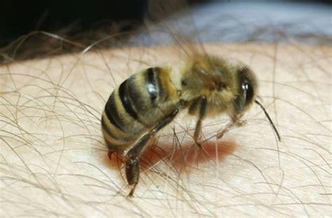 wie vertreibe ich wespen bienen wespen und hornissen wie gef 228 hrlich sind insektenstiche wissen stuttgarter nachrichten