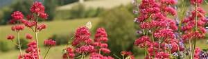 Gartengestaltung Pflegeleichte Gärten : pflegeleichte g rten binder individuelle g rten planung gartengestaltung pflege ~ Sanjose-hotels-ca.com Haus und Dekorationen
