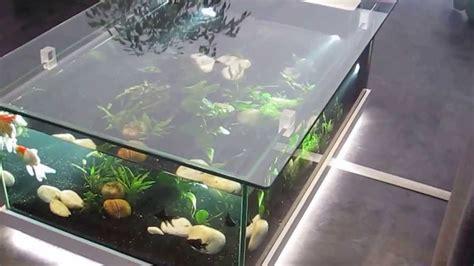 aquarium d eau douce table aquarium amazone odyssee