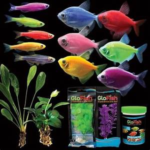 27 best images about Glofish City on Pinterest