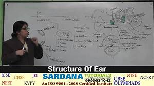 Structure Of Ear