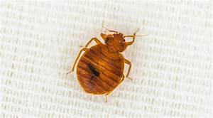 bed bugs removal treatment pacific nw pest control With bed bugs portland