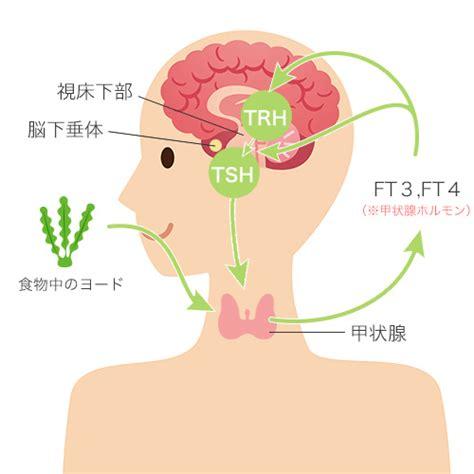 甲状腺 ホルモン 増やす 食べ物