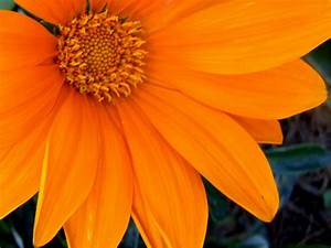 Orange Flowers Images - Reverse Search