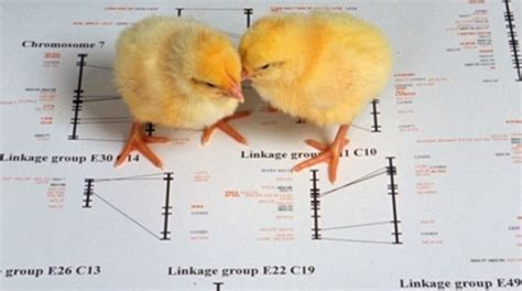 center for food safety issues animal cloning fact sheets compilation and analysis of