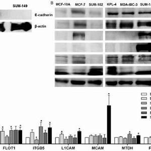 (PDF) The proteome signature of the inflammatory breast ...