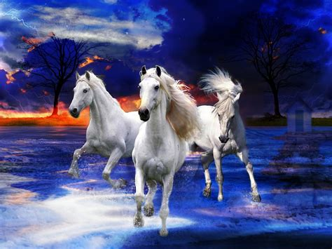 white wild horses photo fantasy art wallpaperscom