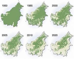 Huile de palme et déforestation   Vivre sans huile de palme