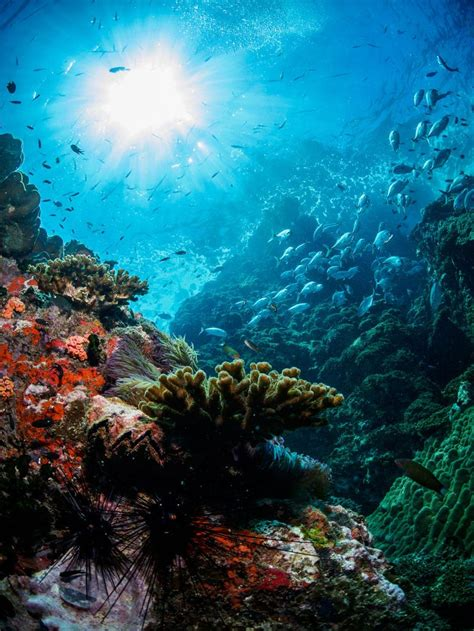 304 Best Under The Sea Images On Pinterest Under The Sea
