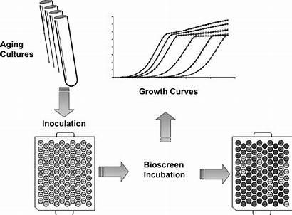 Yeast Bioscreen Aging Plate Span Chronological Measuring