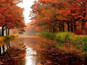 Autumn River Trees Colours Leaves Nature Forests Hd ...