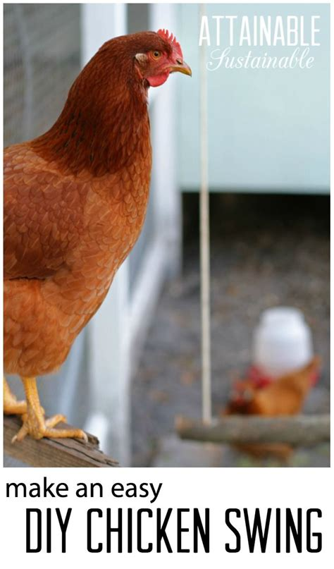 1000 ideas about hens on chicken breeds