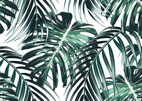 affiches 50 x 70 et 70 x 100 feuille de palmier verte