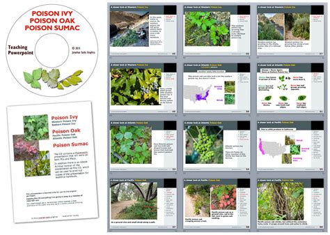 Poison Ivy Poison Oak Poison Sumac Teaching Powerpoint