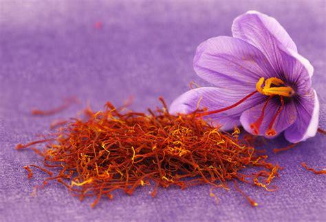 saffron flower dried saffron spice and saffron flower evolva