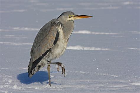 Kalte Füße (Forum für Naturfotografen