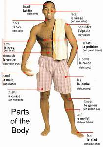 Let U0026 39 S Learn French Together  Parts Of The Body