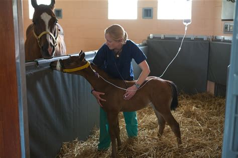 vet animal veterinarians horse techs veterinary medicine hospitals job equipment injuries compensation workers