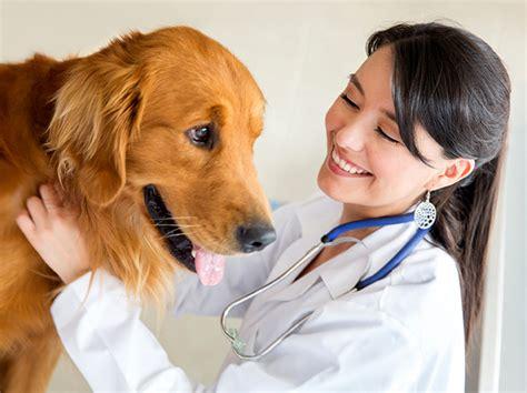 maricopa corporate college announces veterinary assistant