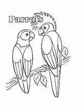 Parrot Coloring Pages Parrots Printable Drawing Realistic Birds Bird Animals Pirate Getdrawings Getcolorings sketch template