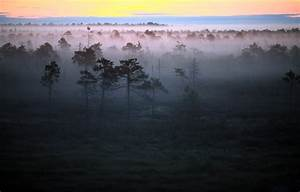 Wallpaper fog, morning, landscape, forest images for ...
