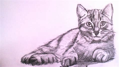 how to draw a realistic cat how to draw a realistic cat with pencil step by step