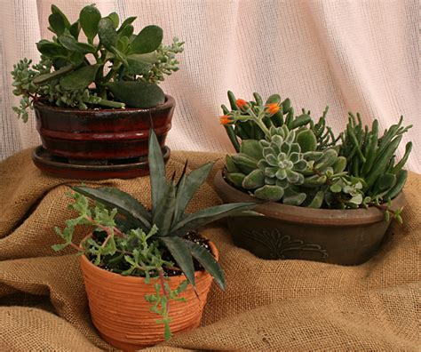 indoor gardening create a container of succulents during