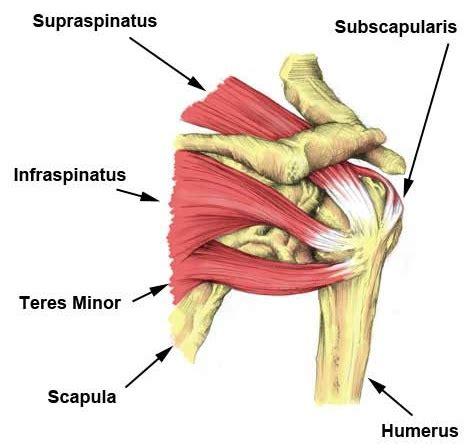 Shoulder MRI's in Asymptomatic elite volleyball athletes ...