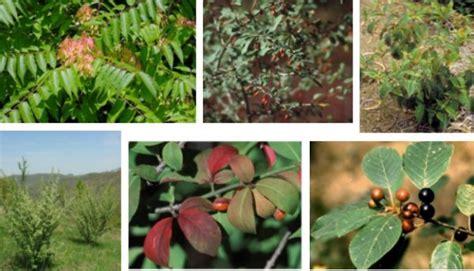 Forest Invasive Species