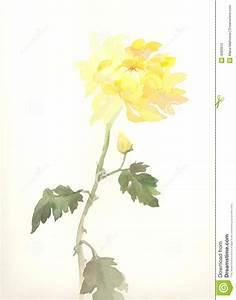 Yellow Chrysanthemum Flower Watercolor Drawing Stock ...