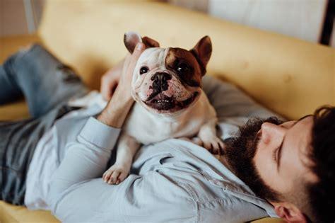 dog food  weight loss insider envy
