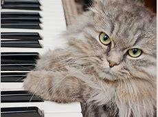 Süße Katze zeigt ihr musikalisches Talent am Klavier