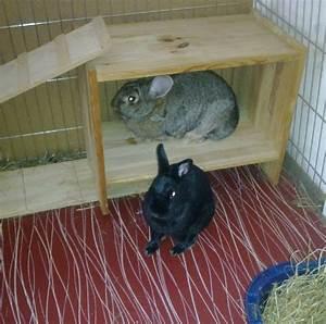 Kaninchengehege Bauen Innen : kaninchengehege ~ Frokenaadalensverden.com Haus und Dekorationen