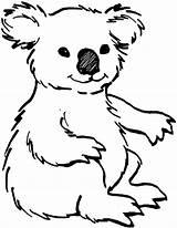 Coloring Animal Koala Koalas Printable Bear Sheets Animals Drawing Draw sketch template