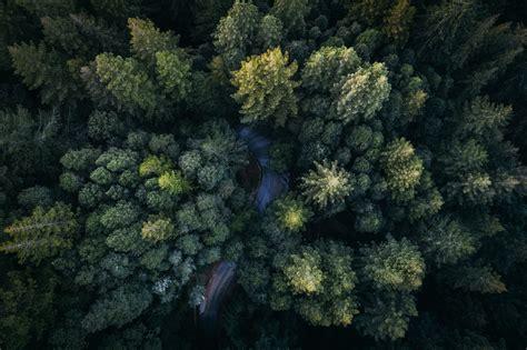 images landscape tree forest plant sky lane