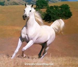 15 Amazing Images of White Horses - Well Done Stuff