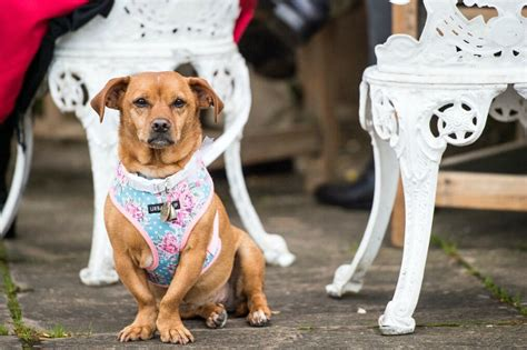 Wedding Accessories For Dogs : How To Include Your Dog In Your Wedding Day