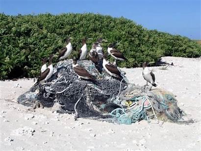 Debris Marine Kure Commons Wikimedia