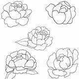 Peony Coloring Patterns Paint sketch template