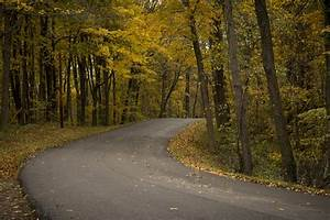 Free, Images, Tree, Nature, Forest, Road, Sunlight, Morning, Leaf, Fall, Pavement, Autumn