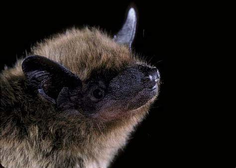 evening bat bats in schools